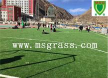 西藏学校填充草坪